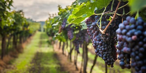 L'Italia vitivinicola ottiene buoni risultati anche in Cina